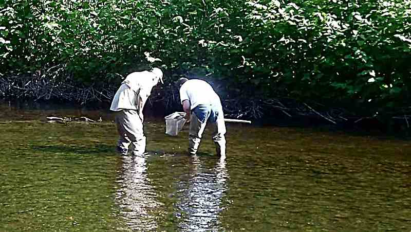 Jim and Bill collecting invertebrates